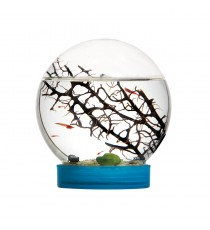 Taos E'Vivo! Mini acquario fai-da-te